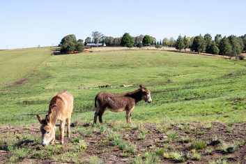 Guest House in the countyside with grazing donkeys