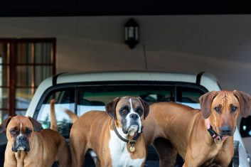 Three dogs reside in the charming Oak Ridge Guest house