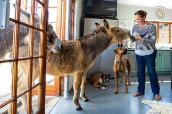 Feed donkeys in the rich countryside at Oak Ridge Guest House
